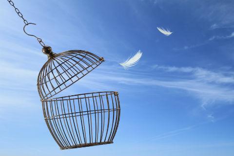 Empty-bird-cage